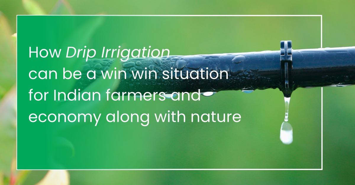 How drip irrigation can be a win-win situation for Indian farmers and economy along with nature