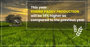 This year Kharif Paddy production will be 14% higher as compared to the previous year