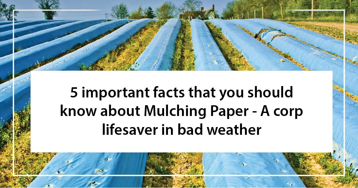 5 important facts that you should know about Mulching Paper - A Crop lifesaver in bad weather