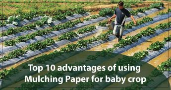 TOP 10 ADVANTAGES OF USING MULCHING PAPER FOR BABY CROP